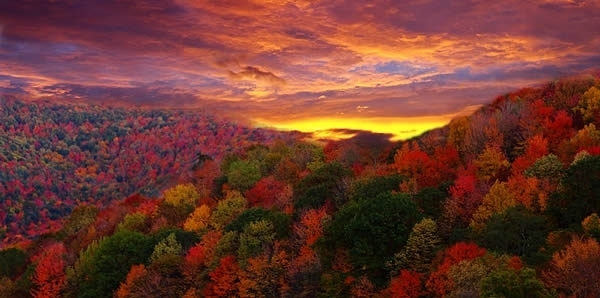The-color-of-fall